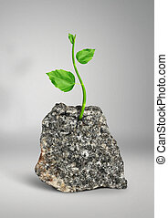 Impossible concept, plant growing in the rock