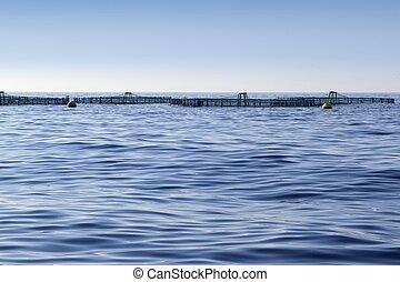 impresa piscicolture, su, oceano blu, mare, orizzonte
