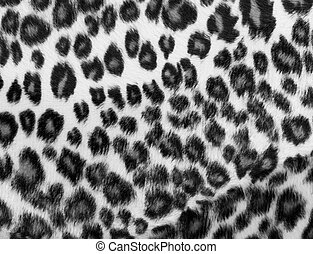 impressão, monocromático, leopardo