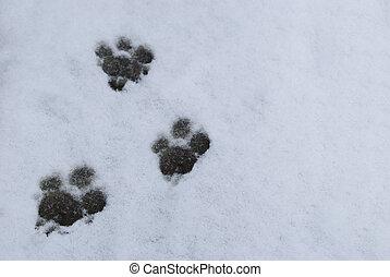 impression, neige blanc, chien, patte
