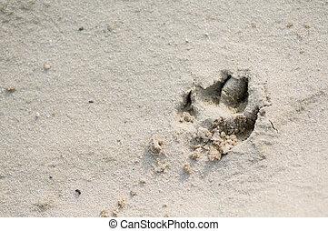 impression, sable, chien, patte