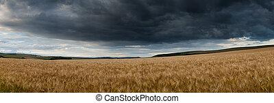 impressionante, campo, panorama, paisagem, trigal, em, verão, su