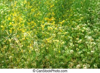 impressionist, fält, wildflowers