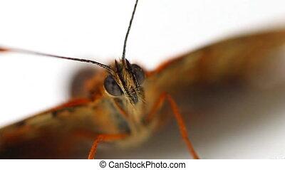 Impressive eye of night butterfly. The microcosm - Big...