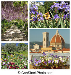 impressive florid Florence in spring - composition, Toscana, Ita