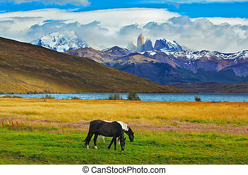 On the shore of Lake grazing horses