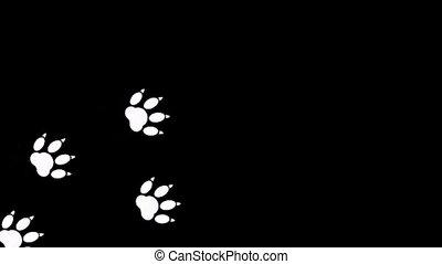 Imprint of the paw animal on black