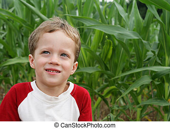 In a corn field