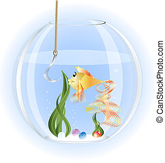 goldfish - in a glass aquarium goldfish surprise stares at a...