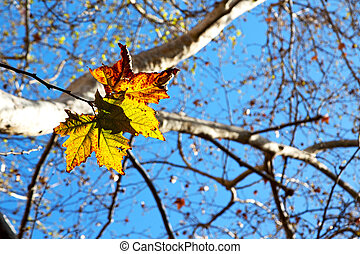 in a park the leaves of autumn like nature concept