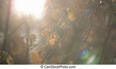 In autumn the branches of a tree with yellow leaves sway...