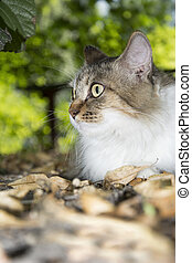 In autumn the foliage is dry cat.