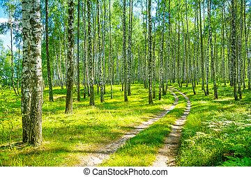 in, birkenwald