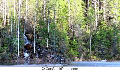 In coniferous forest waterfall. panorama