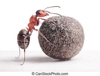 in crosta, pietra, formica, pesante