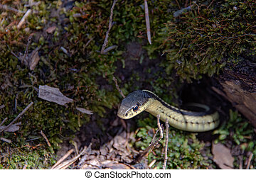 In early spring, snakes crawl out to bask on the sun
