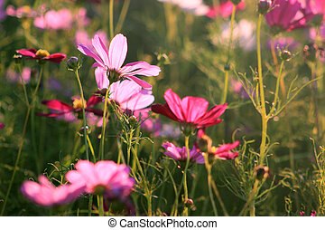 In full bloom of the cosmos