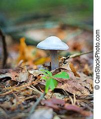 in growing mushroom