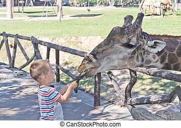 in, il, zoo