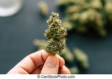 in, mano, di, uomo, macro, di, canapa, erbaccia, marijuana, fiori, con, trichomes, canapa, germoglio