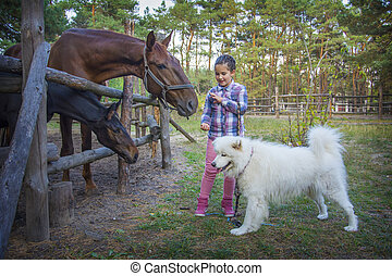 In summer, on the farm, a girl feeds a horse with a foal, and a Samoyed dog stands next to her.