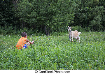 In summer the boy wants to feed the goat with grass.