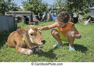 In summer the garden a little boy stroking a calf.