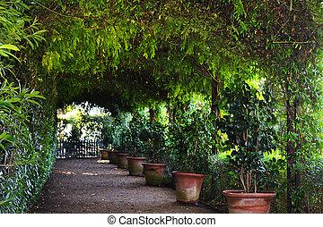In the botanic garden