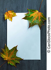 In the center lies a blank sheet of rectangular shape and white and maple colorful leaves