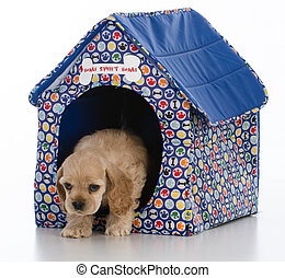 in the dog house - cocker spaniel puppy in a dog house on...
