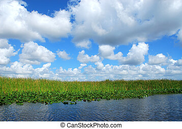 In the Everglades - Puffy white clouds in a blue sky over...