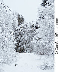 in the forest after a snowfall