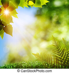 In the forest. Natural backgrounds with fern foliage