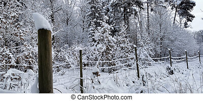 In the forest on a winter morning