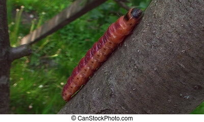 In the garden the tree crawling caterpillar