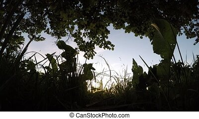 in the grass at sunset