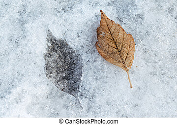 In the ice mark in the shape of a birch leaf.