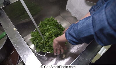 In the kitchen Cook a colander wash parsley in a deep sink....