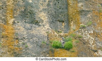 In the ledge on the rock there is a nest with birds. - In...