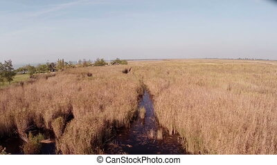 In the nature over swamp aerial footage