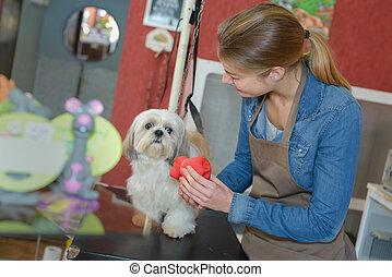 in the pet salon