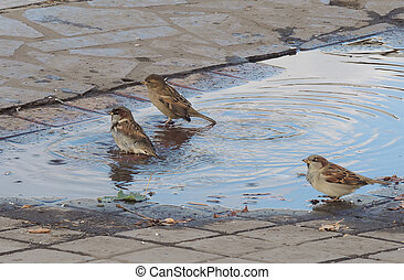In the puddle