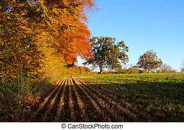 In the shadow of autumn