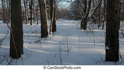 In the snow-covered forest on a bright frosty sunny day. panning from bottom to top