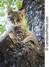 In the summer a cat sits on the tree.