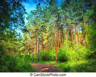 In the summer forest