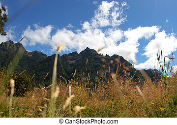 In the tall grass - A low photo through tall grass, lookup...