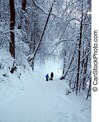 In the winter forest, the trees are covered with snow. The branches of the trees bend under the weight of the snow to the bottom. It is good to roll down the hill in winter.