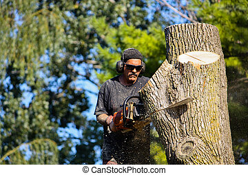 In the Zone - A man with a chainsaw cuts through a large...