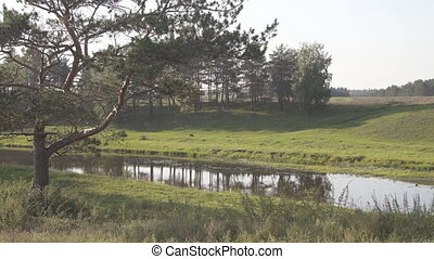 In valley past old pine flows river, black dog running through meadow.